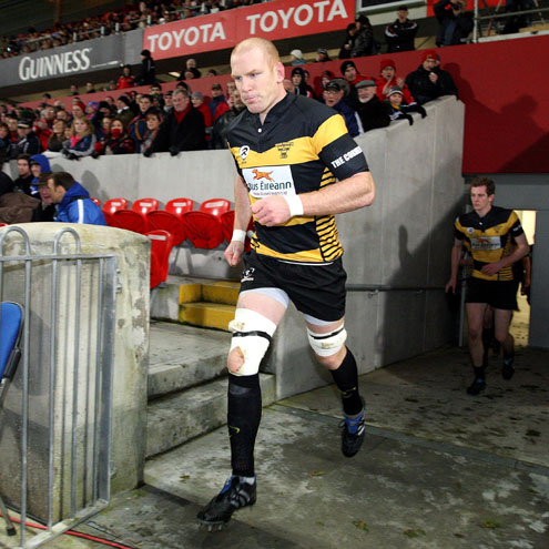 Paul O'Connell will be back in Munster red today