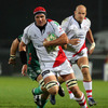 South African lock Johann Muller made a purposeful Heineken Cup debut, taking the ball on when required