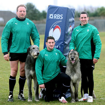 Mick O'Driscoll, Keith Matthews and Paddy Wallace with two Irish wolfhounds